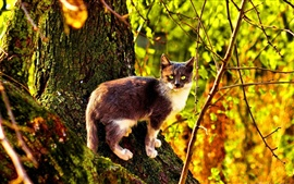 Preview wallpaper Wildcat in the forest, sunlight