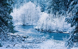 Winter nature scenery, white snow, trees, river