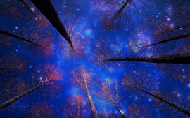 Preview wallpaper Winter snow, sky, night, trees, blue