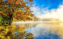Autumn landscape, mist, nature, lake, forest