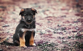 Preview wallpaper Black puppy in the road