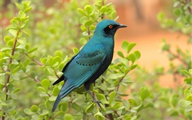 Preview wallpaper Blue bird in the bush