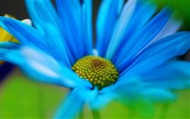 Flor azul close-up
