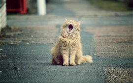 Cute cat yawns