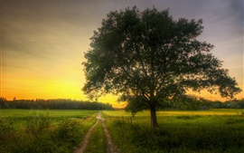 Fields, road, tree, morning, spring