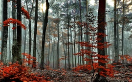 Preview wallpaper Forest, trees, autumn, fog, morning