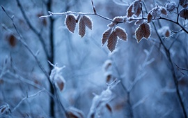 Preview wallpaper Forest winter, branches, leaves, frost