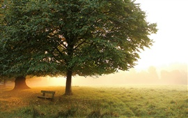 Preview wallpaper Morning park, meadow, trees, bench, mist, autumn