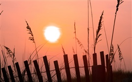Morning sunrise, pink sky, sunshine, fence, grass