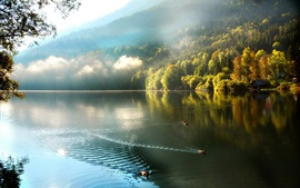 Preview wallpaper Mountains, forest, mist, lake, ducks, morning