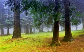 Preview wallpaper Nature scenery, forest, trees, morning, mist, fog