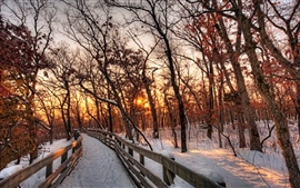 Nature winter landscape, snow, forest, trees, path, sunset