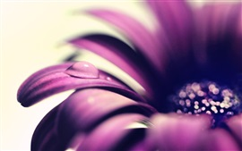 Preview wallpaper Purple flower petals close-up, water drop