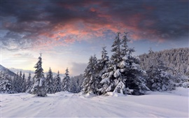 Snow, sunrise, clouds, winter, trees, forest