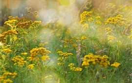 Summer fields, grass, yellow flowers, glare Wallpapers Pictures Photos Images