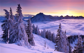 Preview wallpaper Winter, mountains, spruce, trees, snow, fog, clouds, sky, sunrise