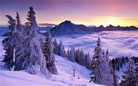 Winter, mountains, spruce, trees, snow, fog, clouds, sky, sunrise