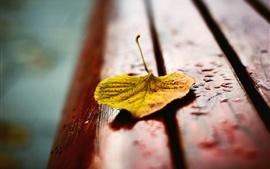 Folha amarela no banco, gotas de água, outono