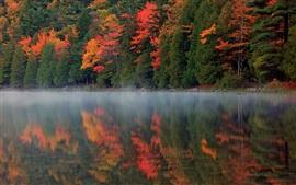 Осень природа, лес, река, отражение, туман