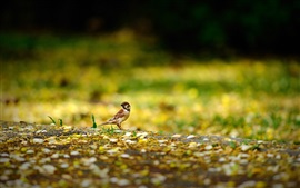 Preview wallpaper Bird, sparrow, ground, yellow