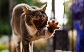 Кот смешно поза, зевая, лапа