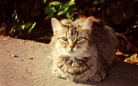Lindo gato, otoño, sol