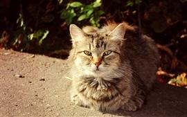 Preview wallpaper Cute cat, autumn, sunshine