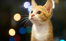 Preview wallpaper Cute kitten, eyes, orange, glare background
