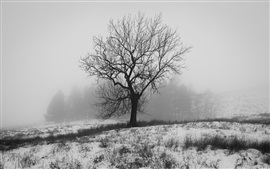 Preview wallpaper England winter, nature snow, tree, fog