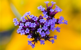 Preview wallpaper Flowers, purple inflorescence, yellow background