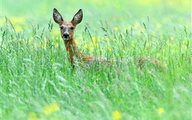 Preview wallpaper Grass, flowers, deer