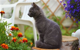 Preview wallpaper Gray cat standing, orange blue flowers