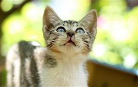 Aperçu fond d'écran Chaton, chat tigré, yeux, éblouissement