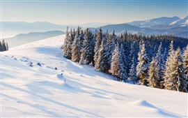 Preview wallpaper Nature winter, snow, pine trees, forest
