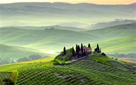 Preview wallpaper Pienza, Tuscany, Italy, spring scenery, fields, trees, morning, fog, green