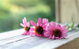 Preview wallpaper Pink flowers macro, wood board