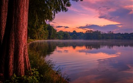 Purple dusk, forest, lake