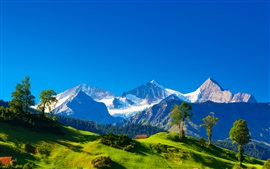 Switzerland, Alps, mountains, green grass, trees, blue sky