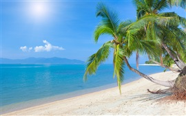Tropical beach, coconut palm, sea, sky, clouds, sunlight