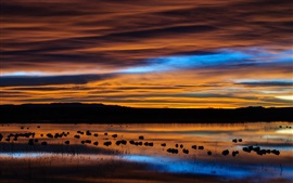 Preview wallpaper USA, New Mexico, preserve, lake, birds, dawn, sky, clouds