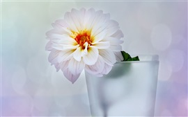 Preview wallpaper Vase, flower, dahlia, white style