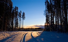 Winter, sunrise, snow, trees, forest, road