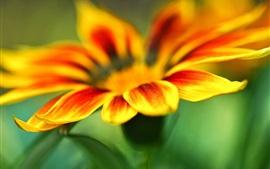 미리보기 배경 화면 노란 오렌지 꽃 꽃잎 매크로, 녹색 배경 흐림