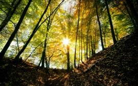Bosque, camino, cerca, niebla, rojo, paisaje de otoño Fondos de ...