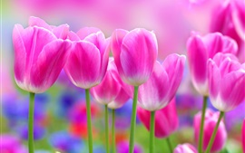 Preview wallpaper Beautiful pink tulips flowers, blur background