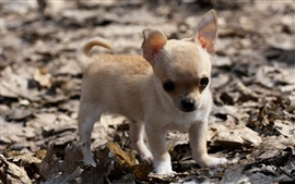 Preview wallpaper Cute dog, puppy, leaves