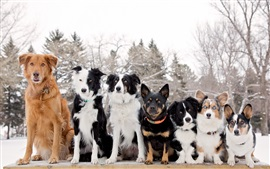 Cães amigos, inverno