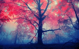 Forest trees, red leaves, fog, mist
