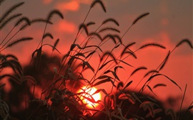 Preview wallpaper Grass, sun, sunrise, red style