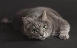 Preview wallpaper Gray cat, green eyes, black background